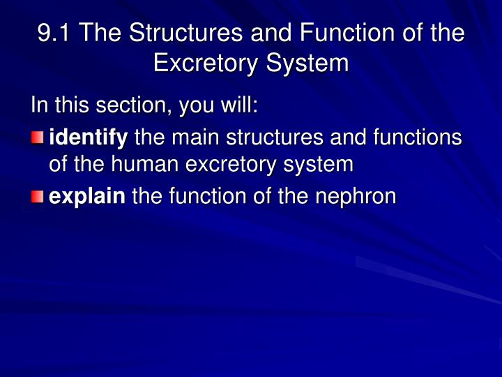 9 1 the structures and function of the excretory system