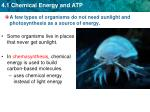 a few types of organisms do not need sunlight and photosynthesis as a source of energy