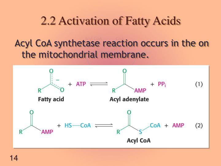 2.2 Activation of Fatty Acids