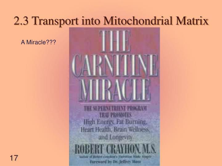2.3 Transport into Mitochondrial Matrix