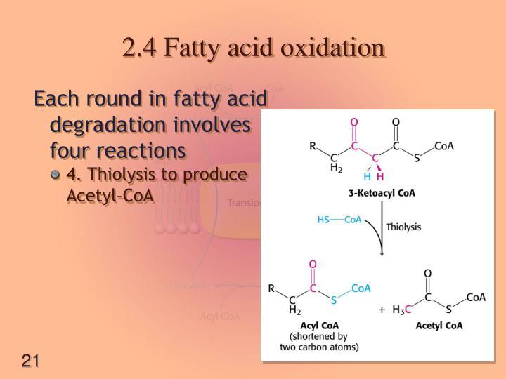 2.4 Fatty acid oxidation