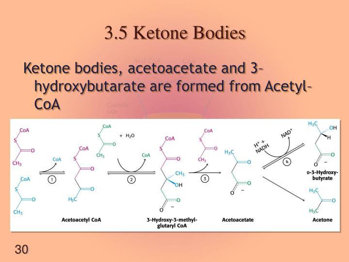 3.5 Ketone Bodies