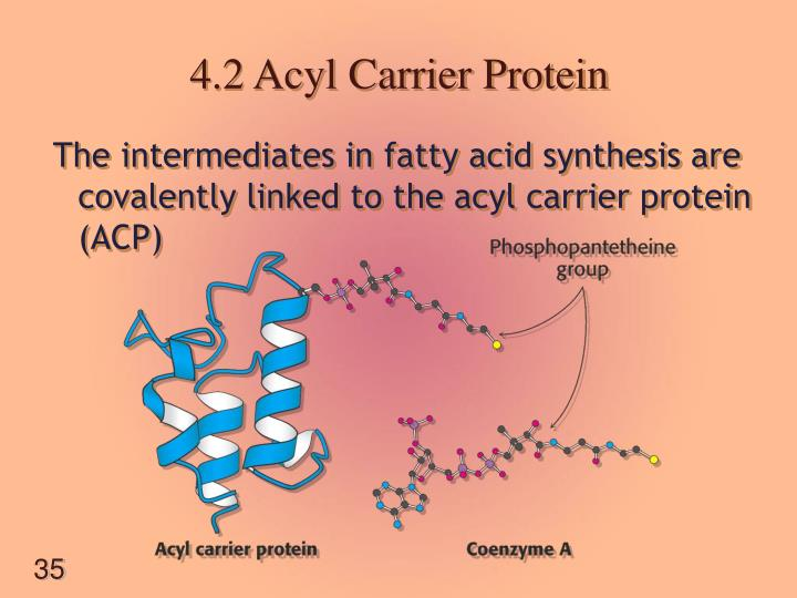 4.2 Acyl Carrier Protein