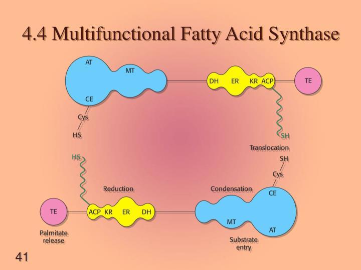 4.4 Multifunctional Fatty Acid Synthase