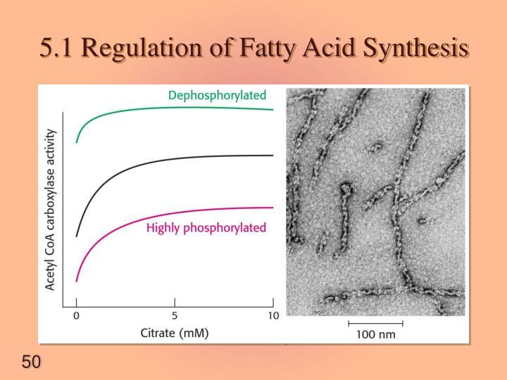 5.1 Regulation of Fatty Acid Synthesis