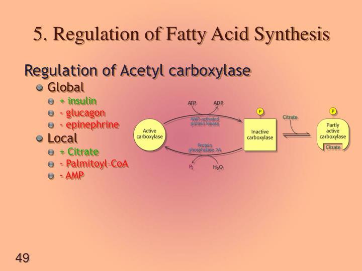 5. Regulation of Fatty Acid Synthesis