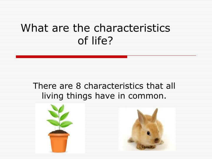 what are the characteristics of life