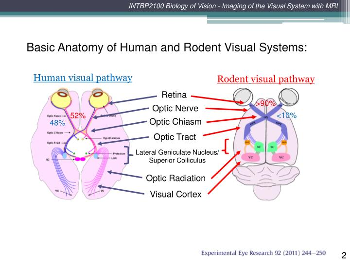 PPT - INTBP2100 Biology of Vision - Imaging of the Visual System ...