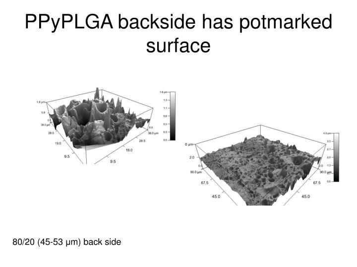 Ppyplga backside has potmarked surface