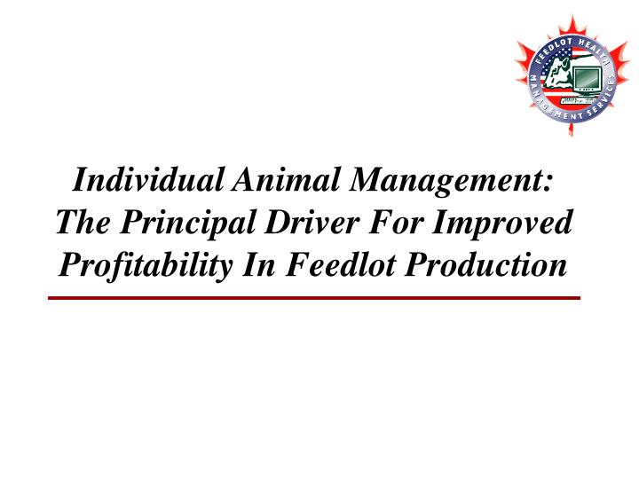 Individual animal management the principal driver for improved profitability in feedlot production