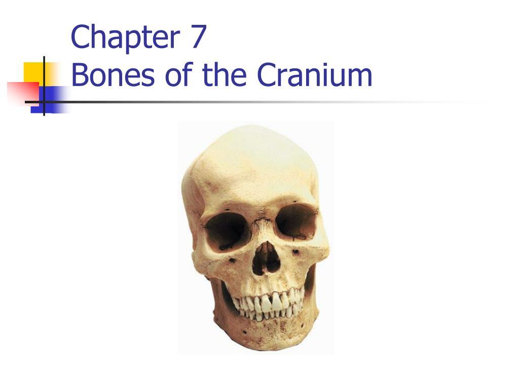 Ppt Chapter 7 Bones Of The Cranium Powerpoint Presentation Id