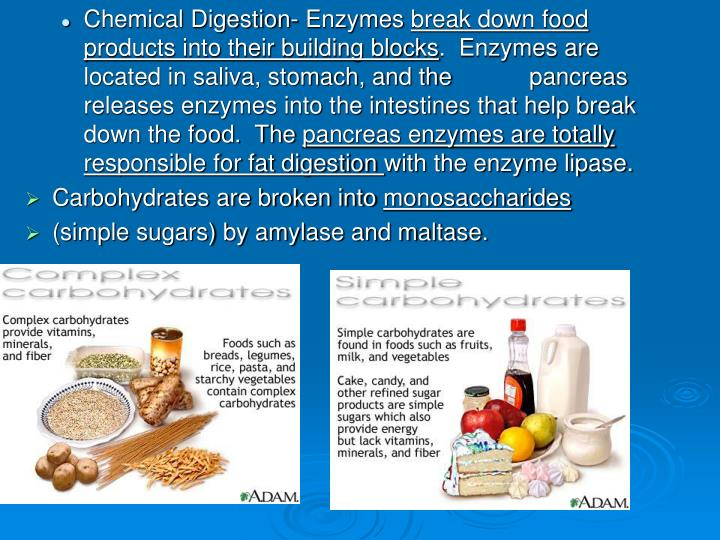 Chemical Digestion- Enzymes