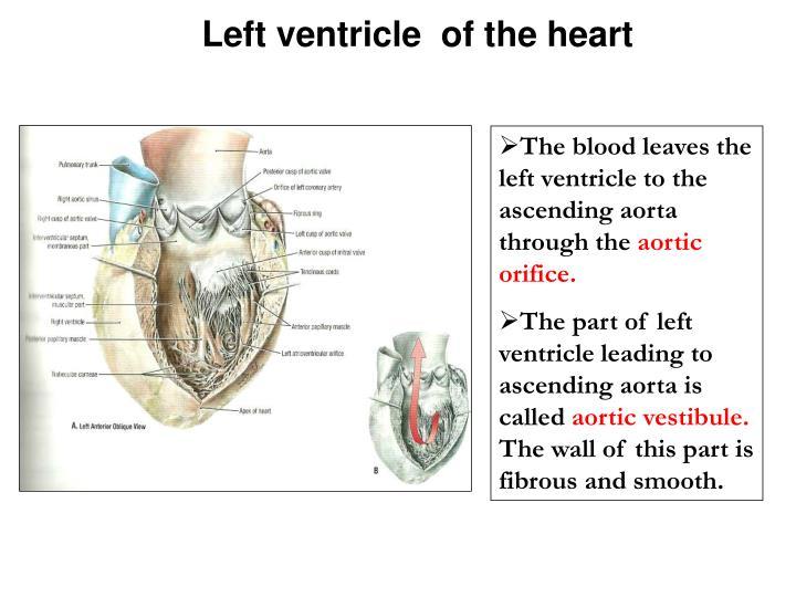 Easygenerator Anatomy Of Heart