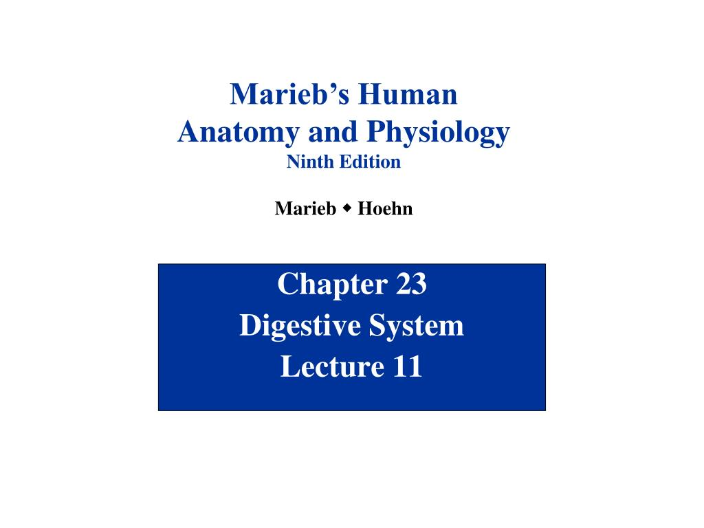 PPT - Chapter 23 Digestive System Lecture 11 PowerPoint Presentation ...