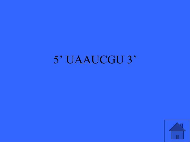 5' UAAUCGU 3'