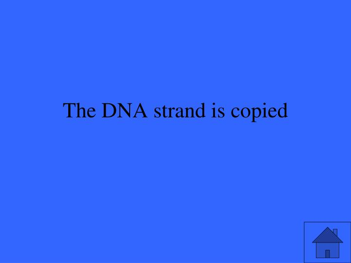 The DNA strand is copied