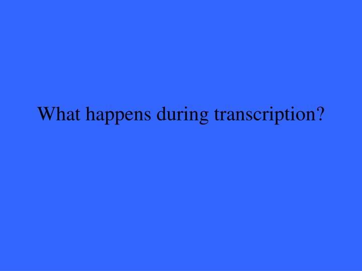 What happens during transcription?