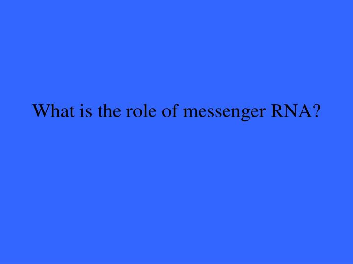 What is the role of messenger RNA?