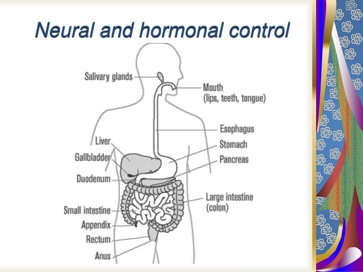 neural and hormonal control n.