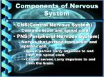 components of nervous system