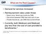 what are the root causes