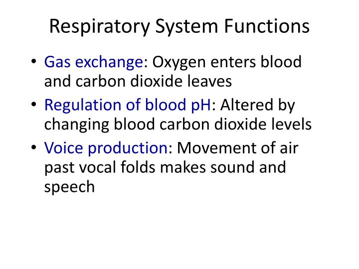 Ppt The Respiratory System Powerpoint Presentation Id6418158