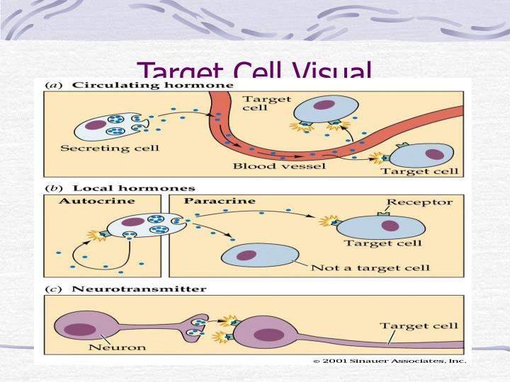Target Cell Visual