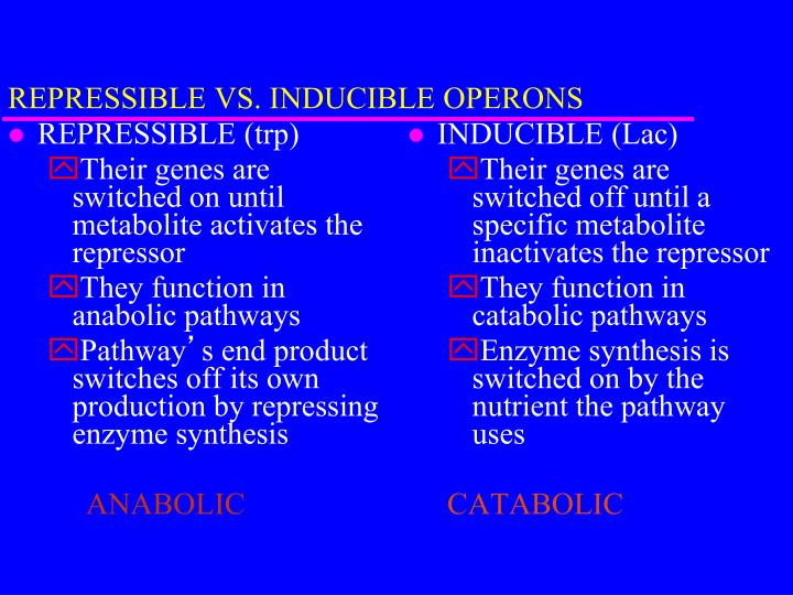 REPRESSIBLE VS. INDUCIBLE OPERONS