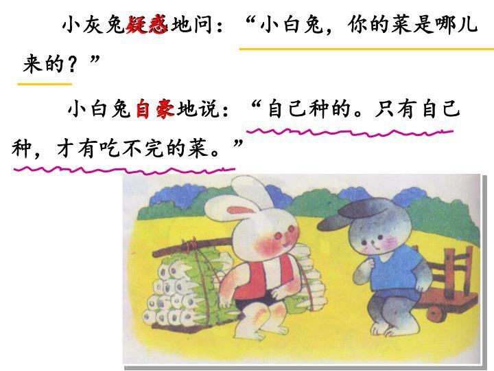 """小灰兔疑惑地问:""""小白兔,你的菜是哪儿来的?"""""""
