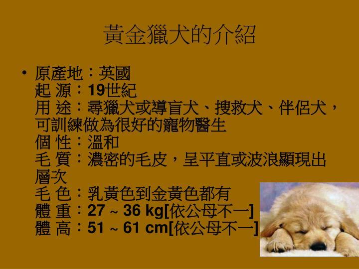 黃金獵犬的介紹