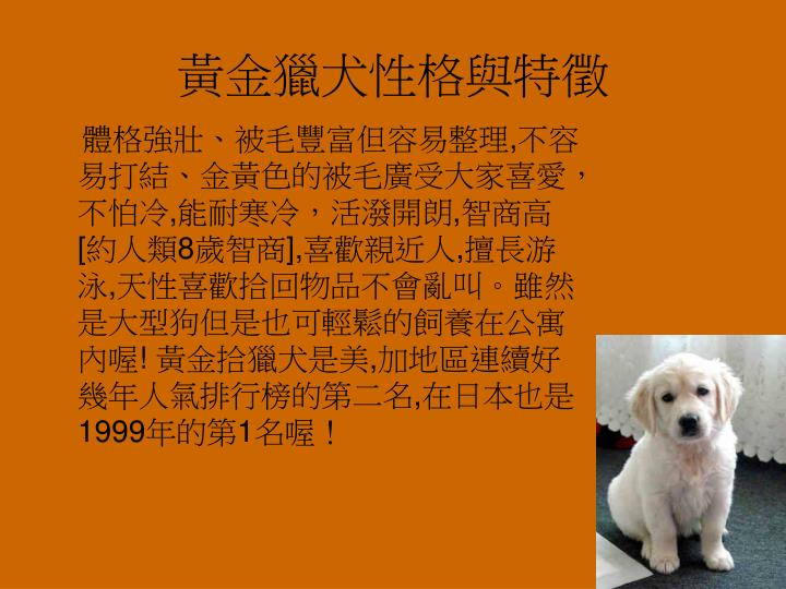 黃金獵犬性格與特徵