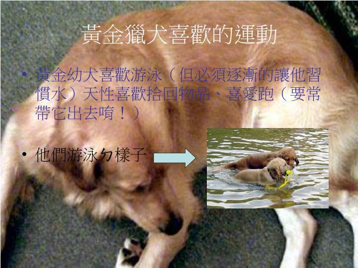 黃金獵犬喜歡的運動
