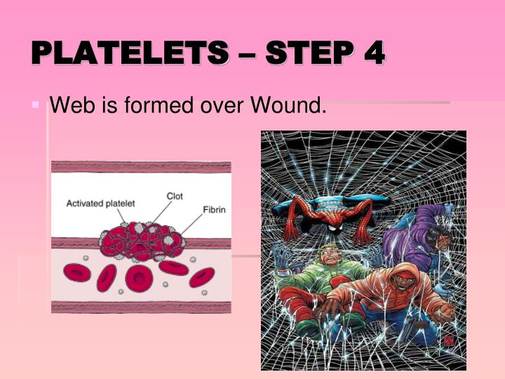 Web is formed over Wound.