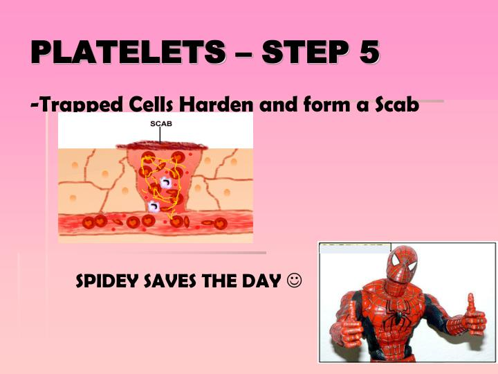 -Trapped Cells Harden and form a Scab