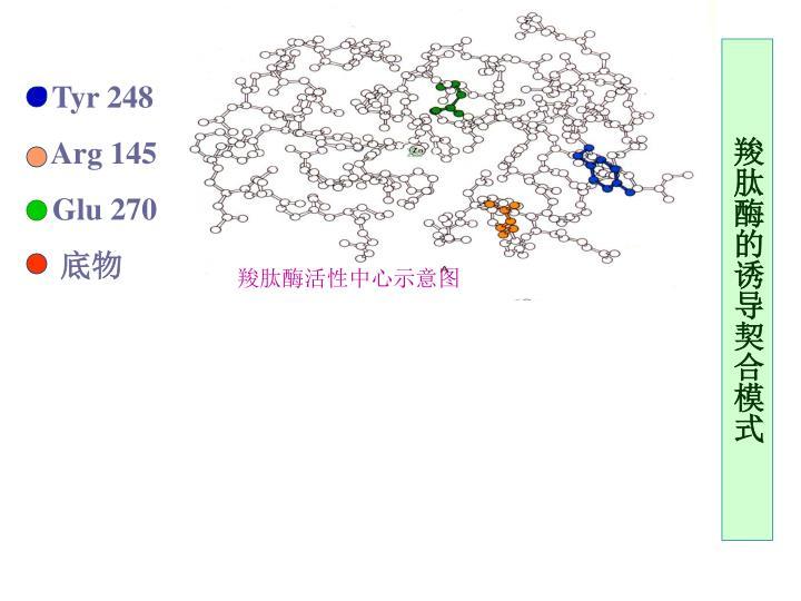 羧肽酶活性中心示意图