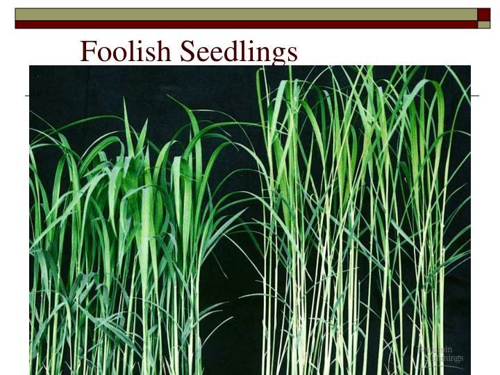 Foolish Seedlings