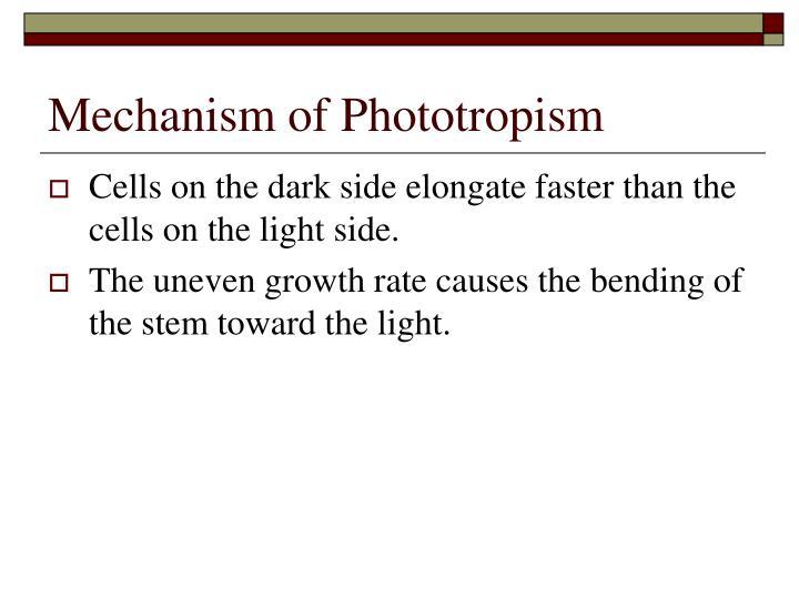 Mechanism of Phototropism