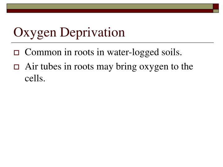 Oxygen Deprivation
