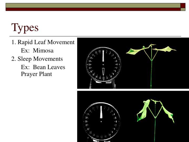 1. Rapid Leaf Movement