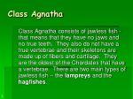 class agnatha