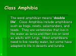 class amphibia