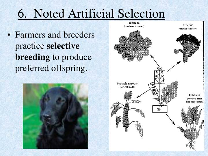 6.  Noted Artificial Selection