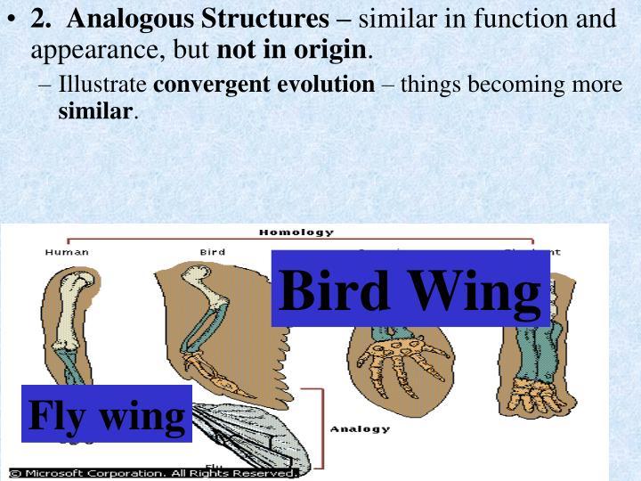 2.  Analogous Structures –