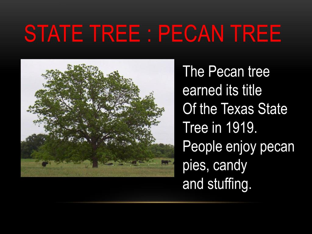 Ppt Texas State Symbols Powerpoint Presentation Free Download Id 6440494