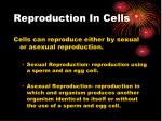 reproduction in cells