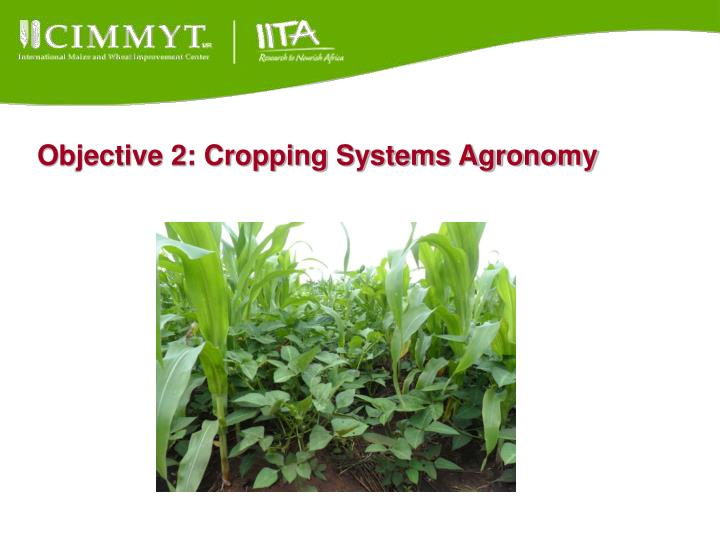 Objective 2: Cropping Systems Agronomy