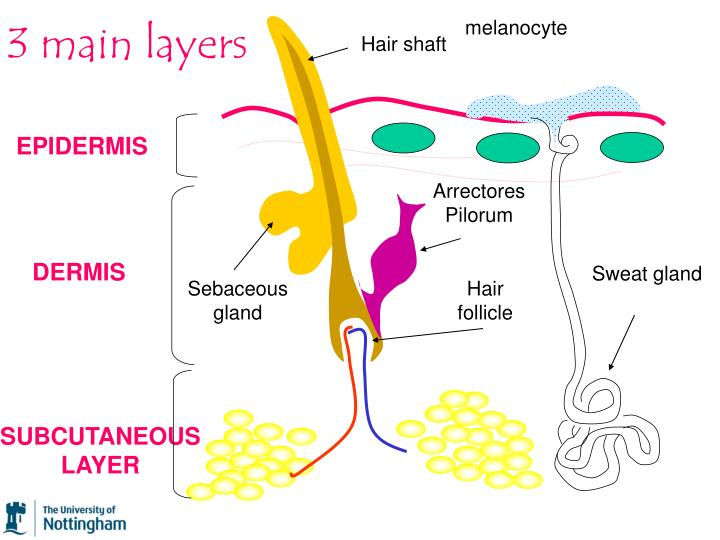 3 main layers