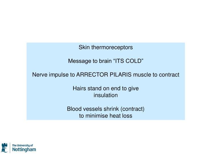 Skin thermoreceptors