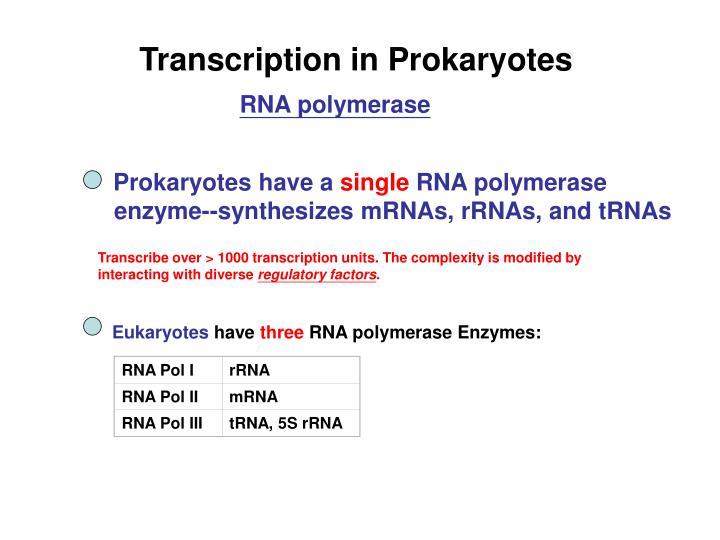 RNA Pol I