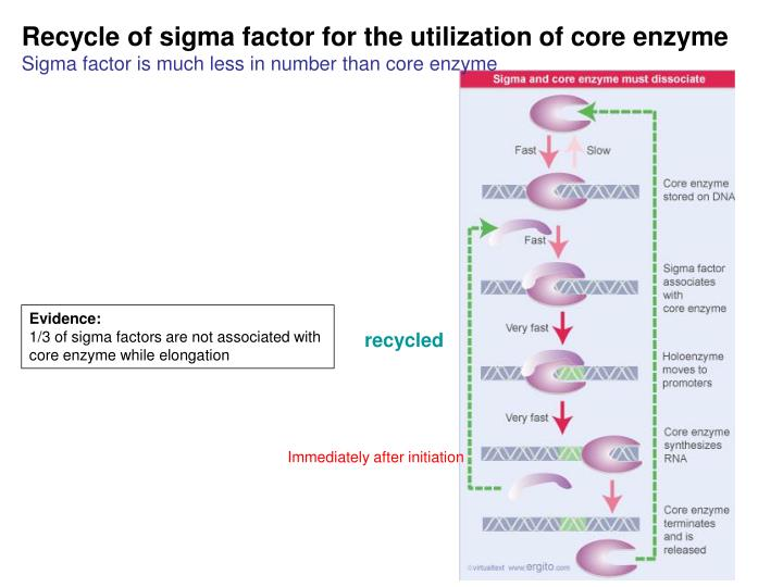 Recycle of sigma factor for the utilization of core enzyme